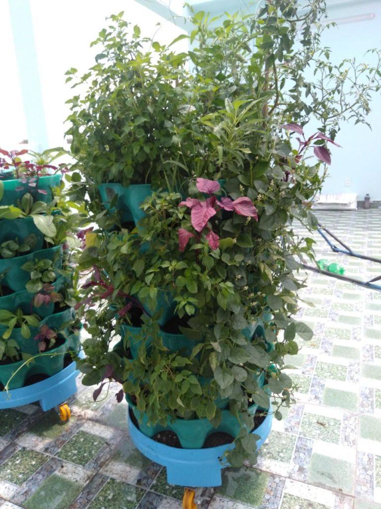 tháp rau hữu cơ