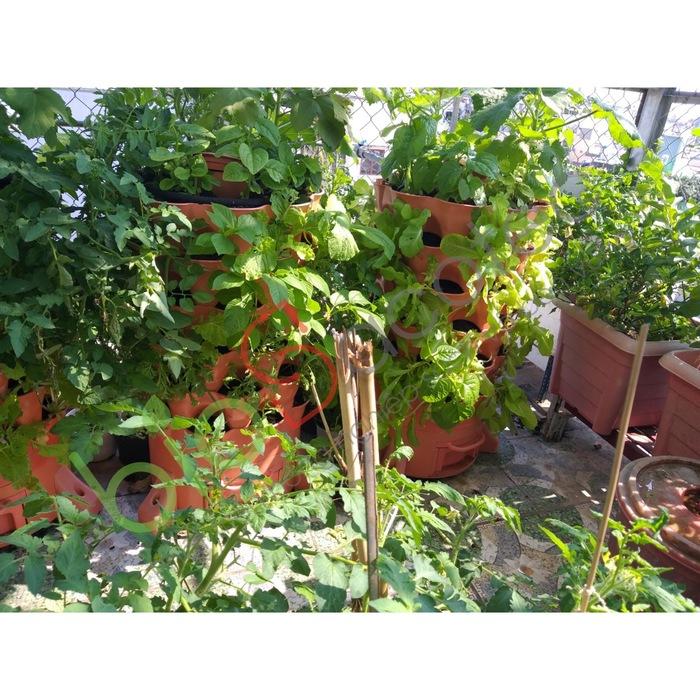 ảnh khách trồng rau 0
