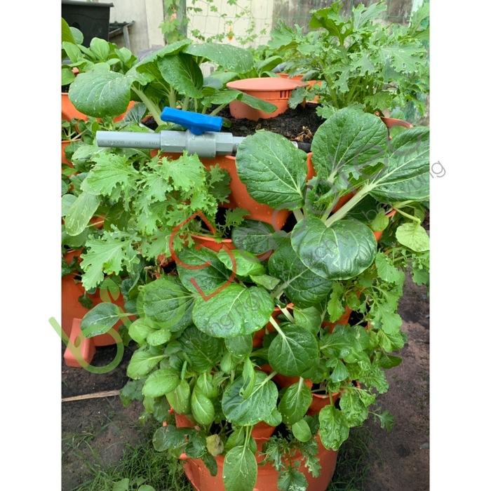ảnh khách trồng rau 10