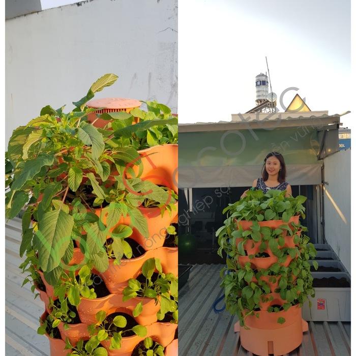 ảnh khách trồng rau 13