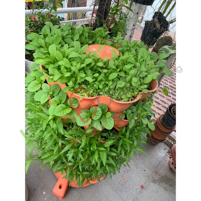 ảnh khách trồng rau 14