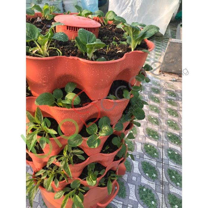 ảnh khách trồng rau 15