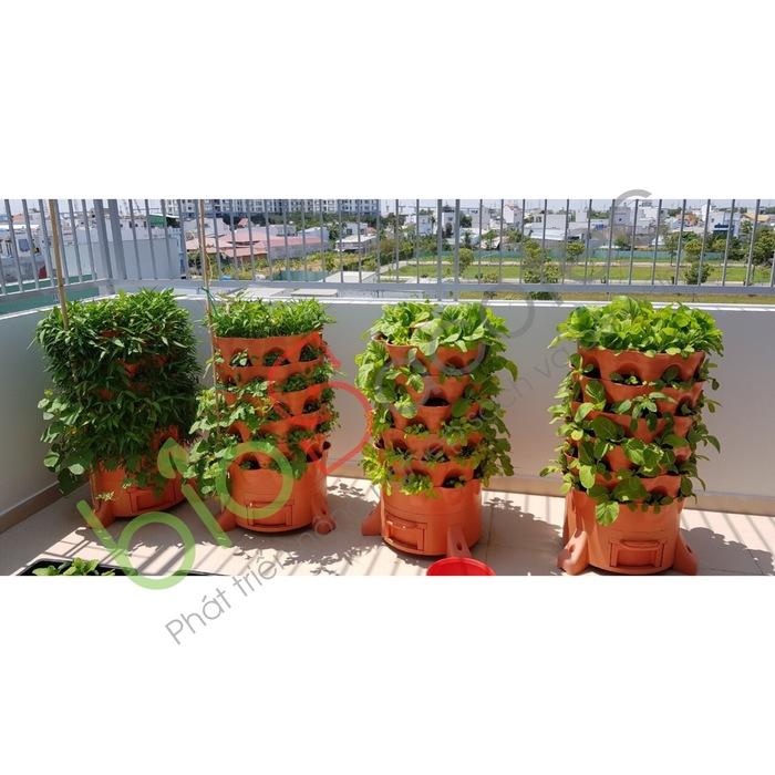 ảnh khách trồng rau 2