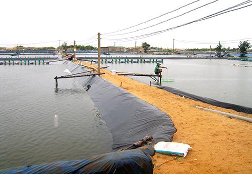 Chuẩn bị ao nuôi tôm nước mặn trong ao nước ngọt