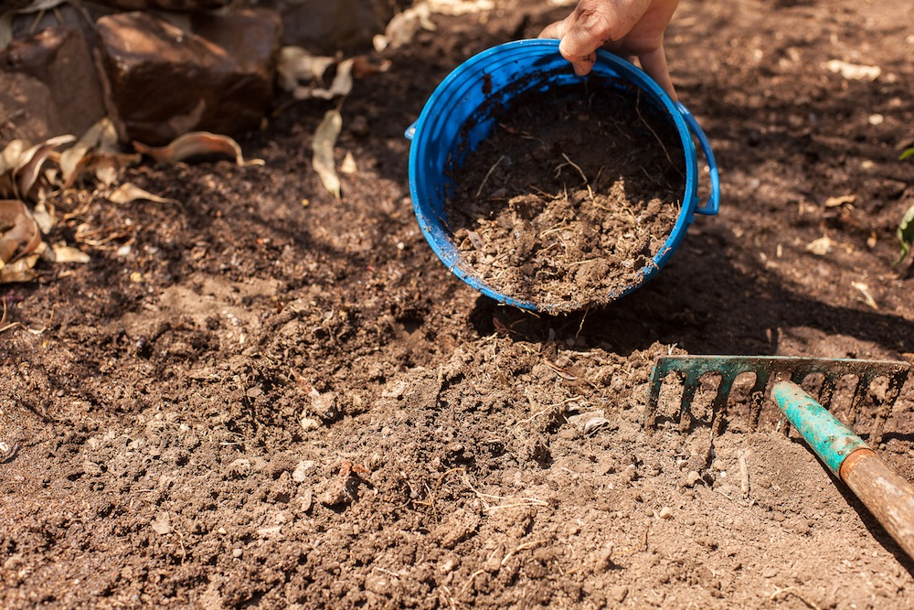 Sử dụng đất nghèo dinh dưỡng