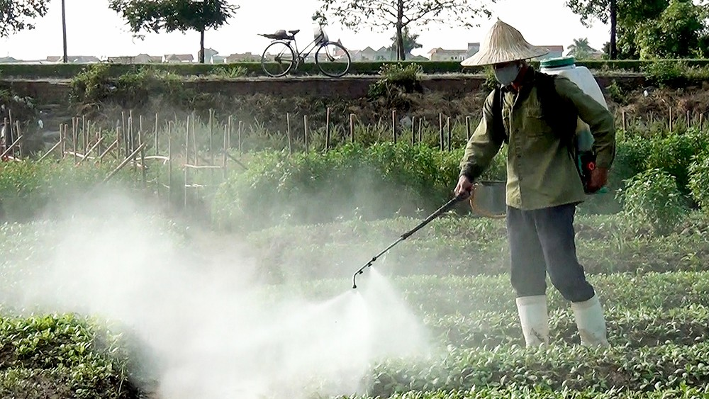Rau trở nên bẩn do Các loại phân hóa học và thuốc bảo vệ thực vật
