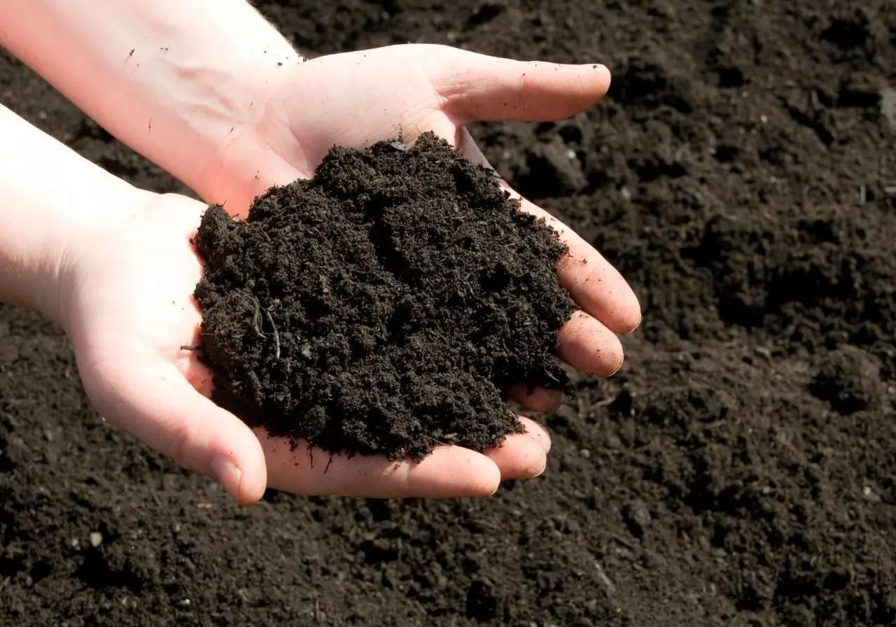 Cải tạo đất giúp tiêu diệt các loài vi sinh vật có hại