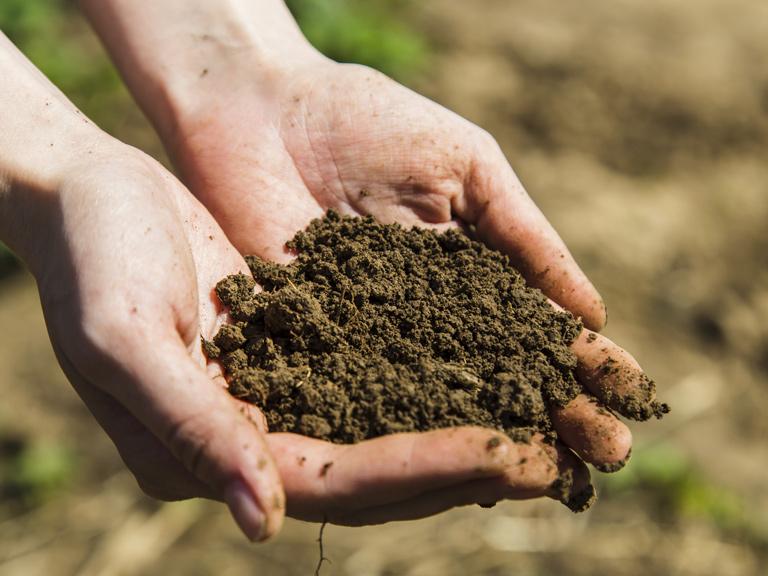 Cải tạo đất bằng cách bổ sung thêm đất mới