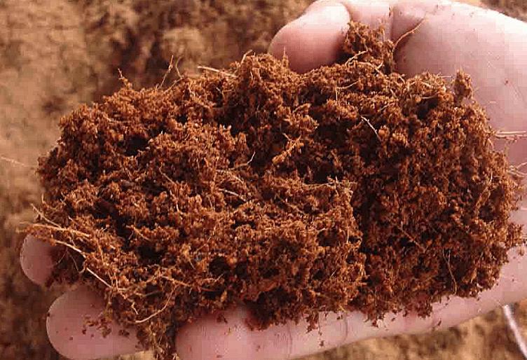 Đất trồng rau mầm