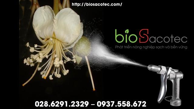 Bón phân cho sầu riêng giai đoạn ra hoa và tạo quả