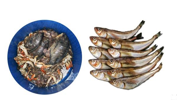 phân cá là gì