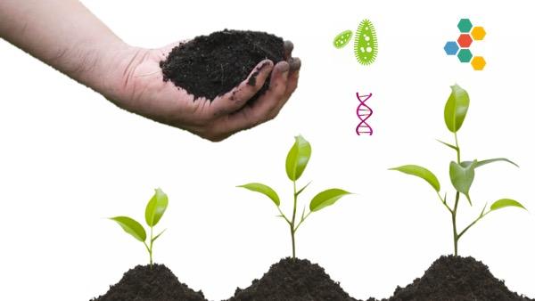 phân vi sinh là gì