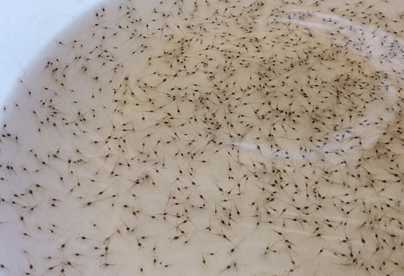 Chăm sóc ấu trùng