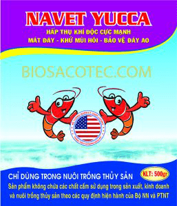 Navet Yucca