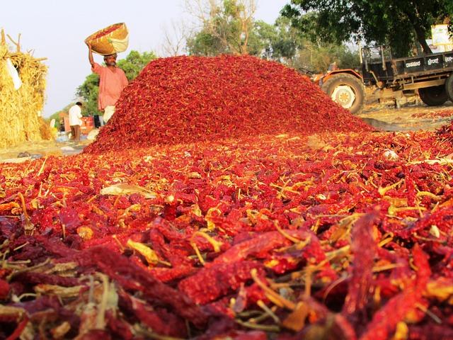 Bệnh thường gặp trên cây ớt