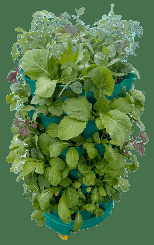 Bộ tháp rau đầy đủ có dây tưới