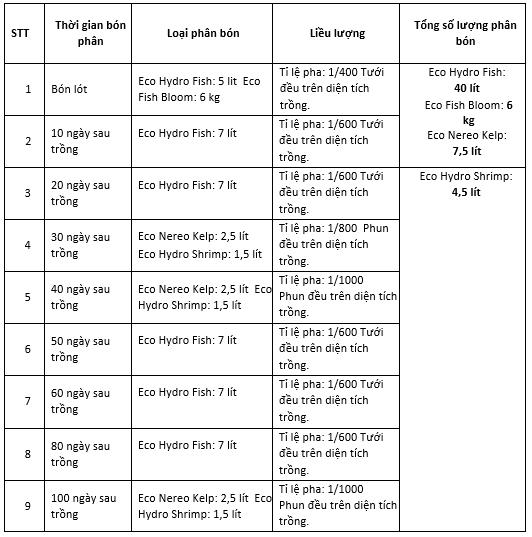 quy trình bón phân cho cây bắp cải
