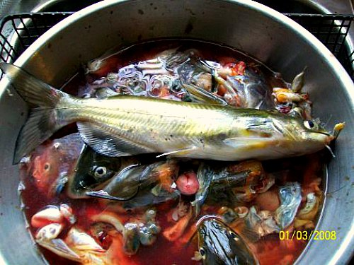 cách ủ phân đạm cá