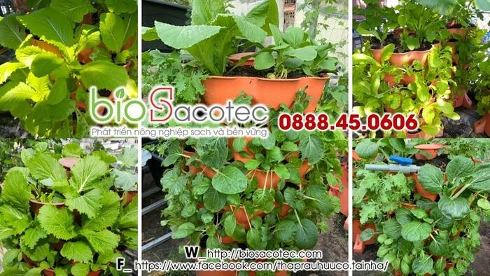 cải tạo đất trồng rau hữu cơ