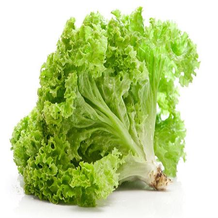 Rau diếp và xà lách là 1 trong các loại rau sạch trồng tại nhà