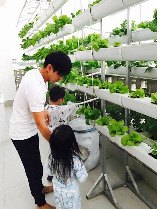ca sĩ Lý Hải trồng rau trên sân thượng