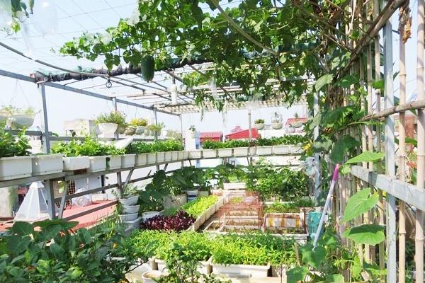 làm giàn trồng rau sân thượng