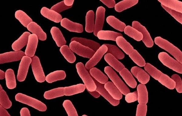 Vi khuẩn BACILLUS VÀ NHỮNG LỢI ÍCH TRONG XỬ LÝ MÔI TRƯỜNG