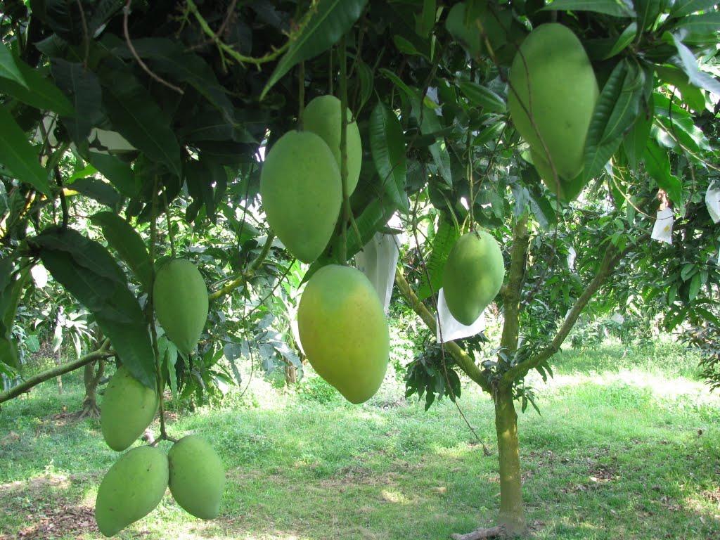 Bảo vệ hoa và trái