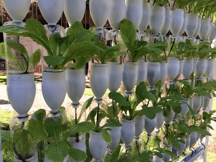 Mô hình trồng rau sạch bằng chai nhựa