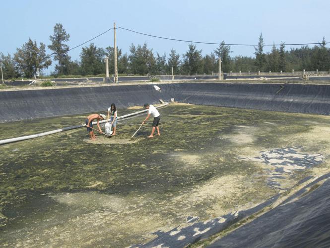 Ao nuôi phải đáp ứng đúng các quy định chung