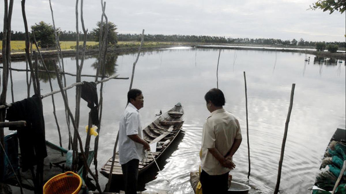 Nhiều hộ gia đình ở Đồng Bằng Sông Cửu Long rải muối nuôi tôm thẻ