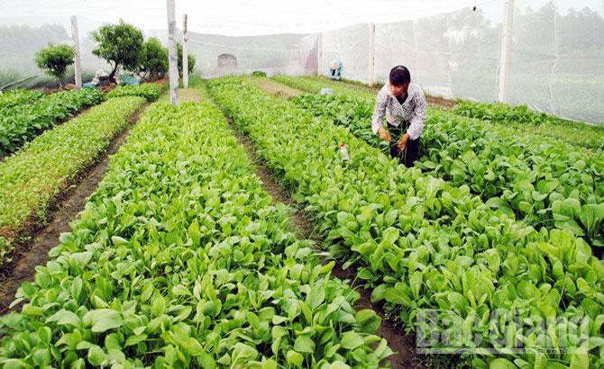 quy trình sản xuất rau an toàn