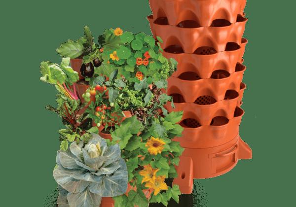 tháp rau
