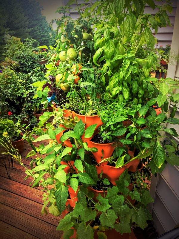 Tháp rau mang đến không gian xanh cho gia đình