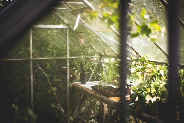 Trồng rau sạch tại nhà