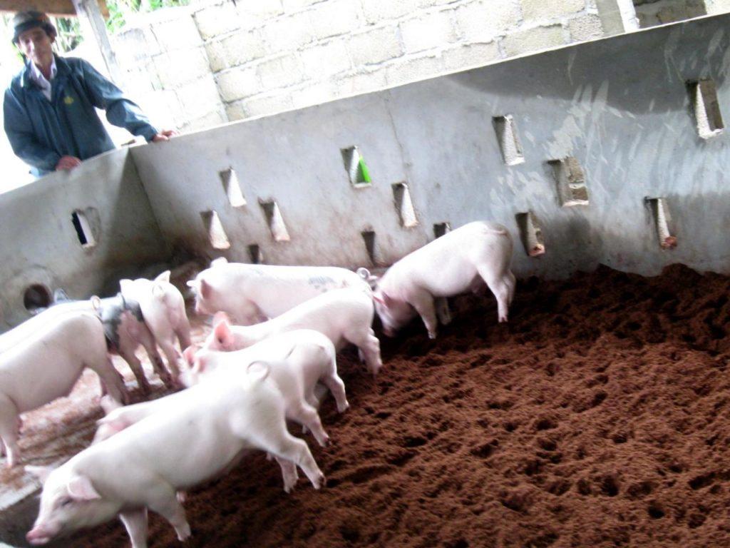 chế phẩm sinh học trong chăn nuôi heo