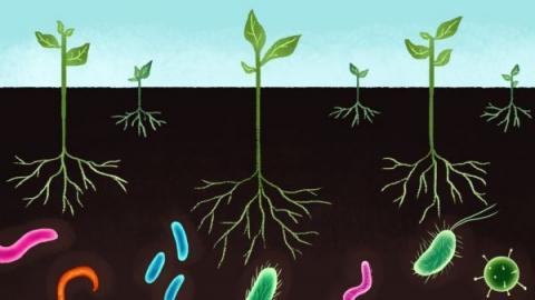 vi sinh hoạt động như thế nào