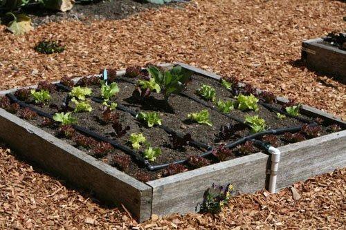 thiết kế vườn rau bằng khuôn gỗ