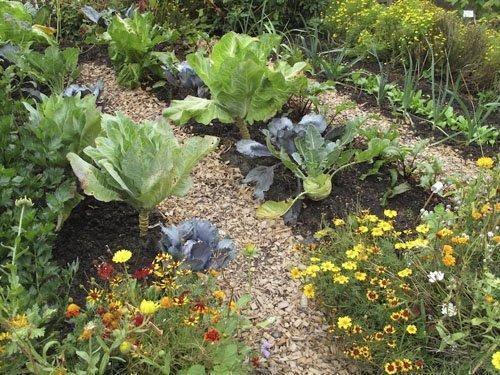 thiết kế vườn rau sạch xen kẽ