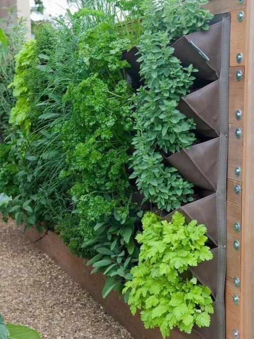 túi trồng rau treo tường