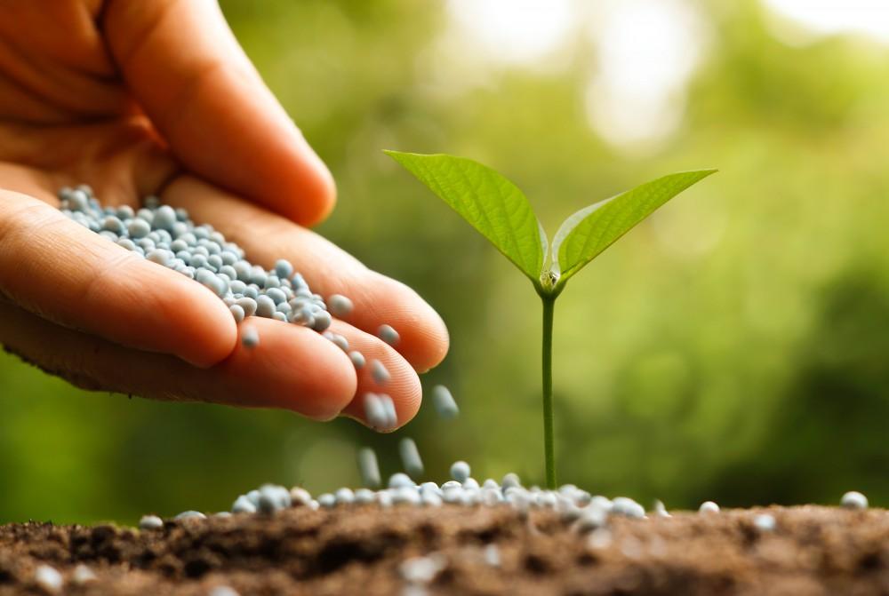 Bón bề mặt đất trồng rau