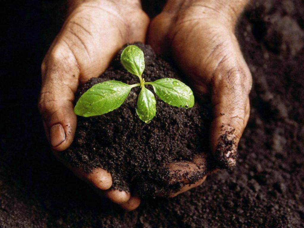 Những lưu ý quan trọng khi bón phân cho rau sạch