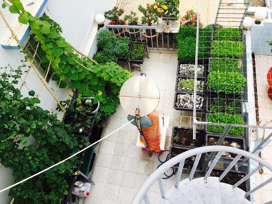 Hotgirl trồng rau trên sân thượng