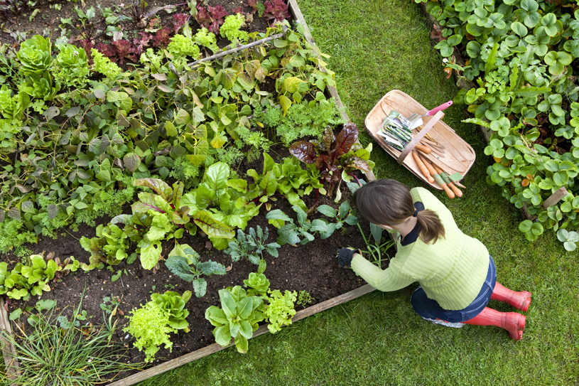 kinh nghiệm trồng rau hữu cơ tại nhà