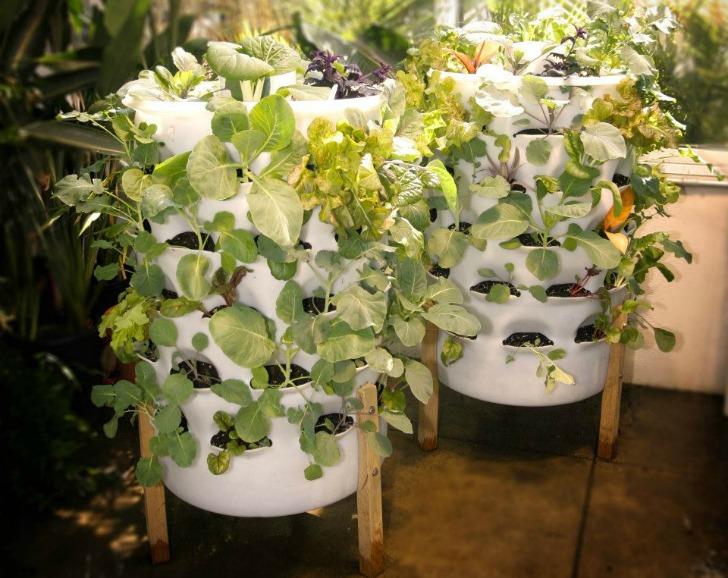 thiết kế hệ thống trồng rau sạch tại nhà