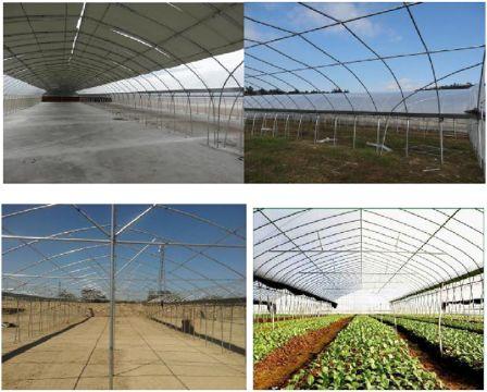 Nhà lưới tiêu chuẩn đa khẩu độ trồng rau