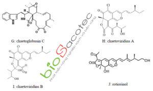 chaetomium 1