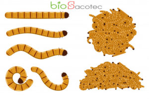 flour worms vector cartoon set isolated 97231 1407