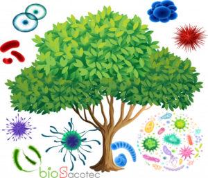 tree 1308 36471 1
