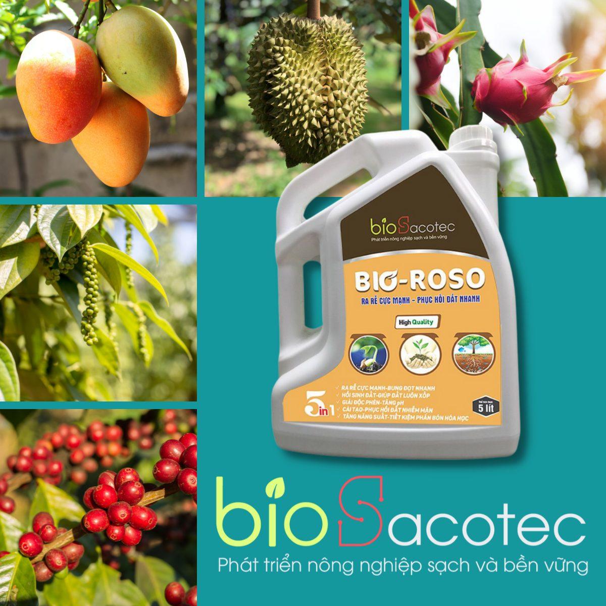 Can tưới gốc sinh học Bio Roso - ra rễ mạnh, bung đọt nhanh, hồi sinh đất, giúp đất luôn xốp, giải độc phèn